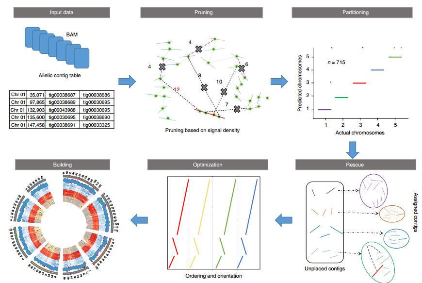 ALLHiC: 辅助组装简单的二倍体基因组
