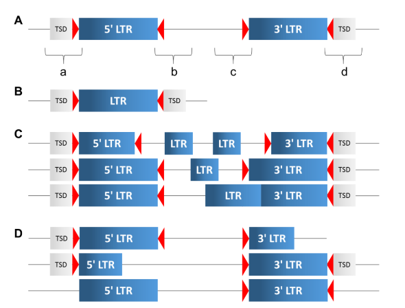 LTR-RT结构