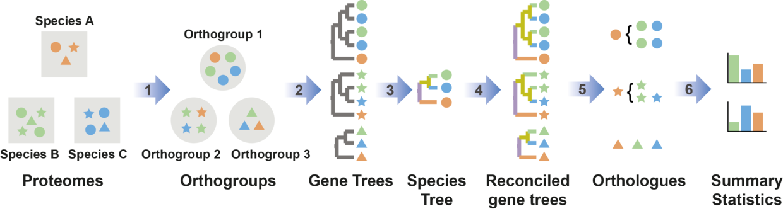 使用OrthoFinder进行基因家族分析