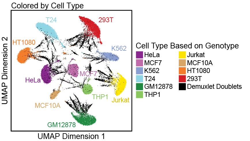 使用ArchR分析单细胞ATAC-seq数据(第二章)