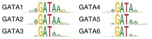 使用ArchR分析单细胞ATAC-seq数据(第十五章)