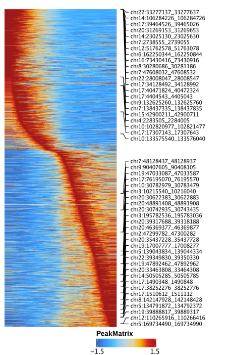 Plot-MyeloidU-Traj-Heatmaps_4